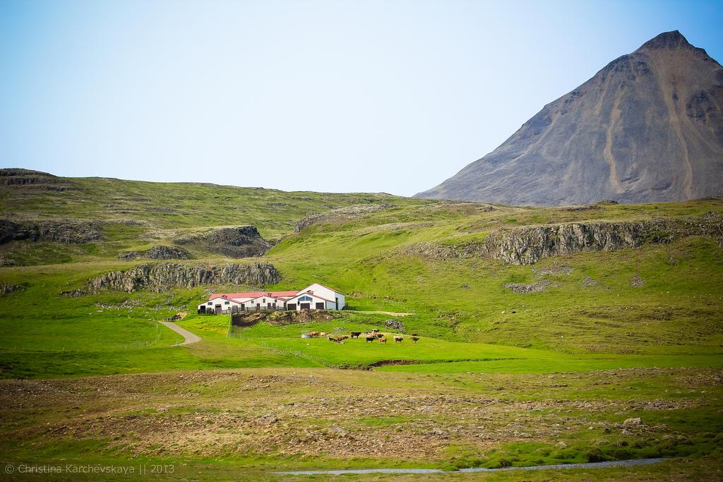 Исландия [14]: День 6. Лети-лети, лепесток… Назад в Рейкьявик.