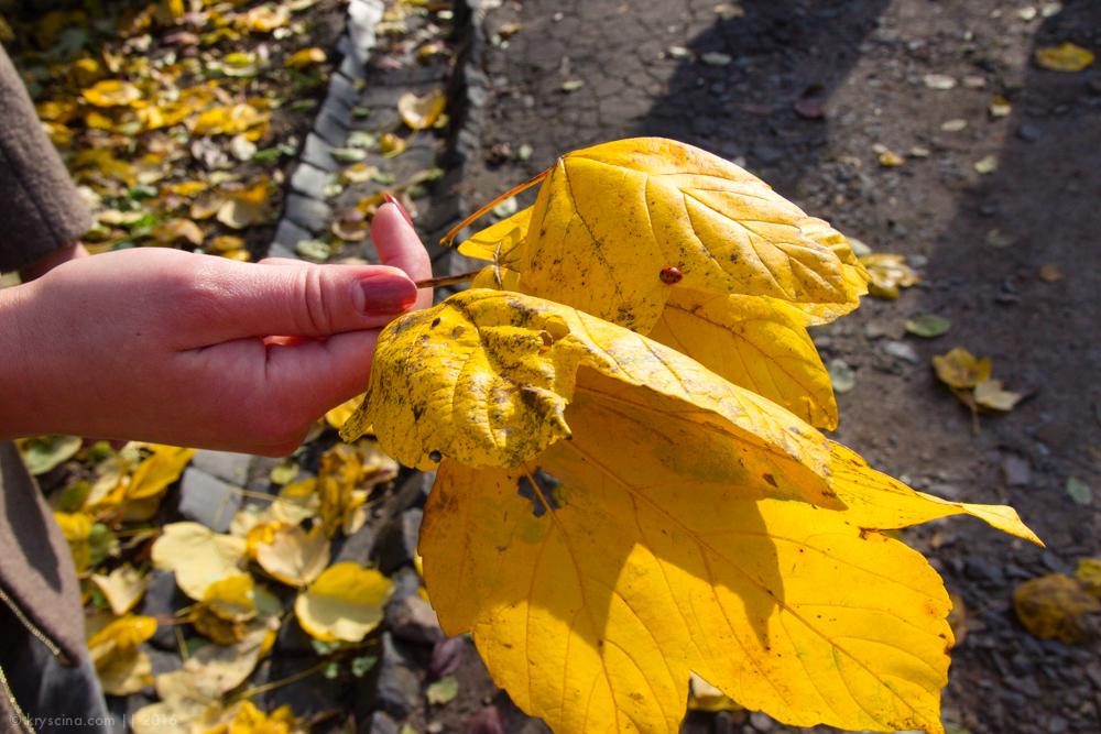 львов, путешествие, украина, осень, желтые листья