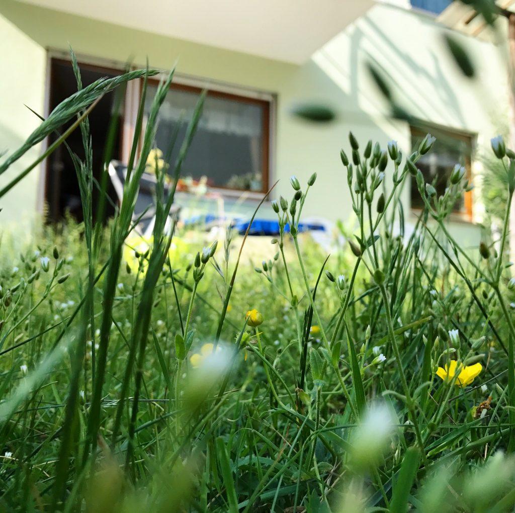 читать в траве
