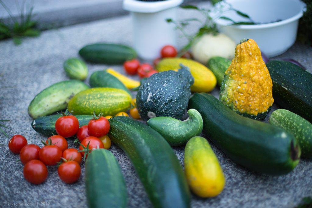 Огород в Германии: приключения Садового Гнома
