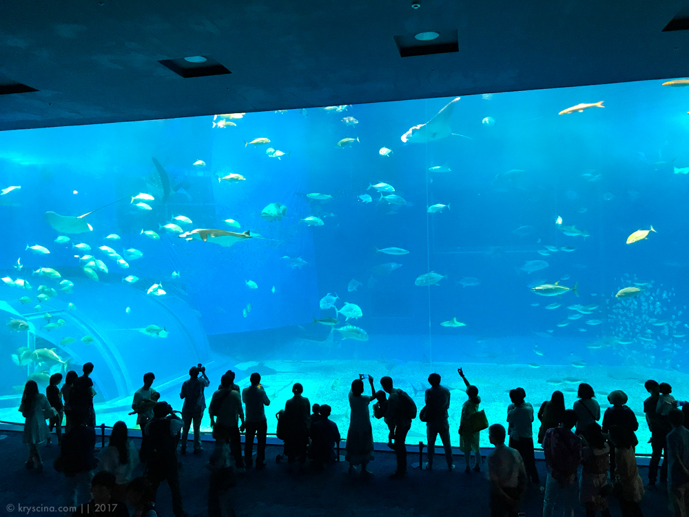 океанариум окинавы