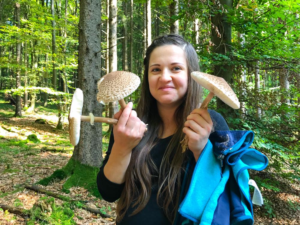 грибные леса баварии