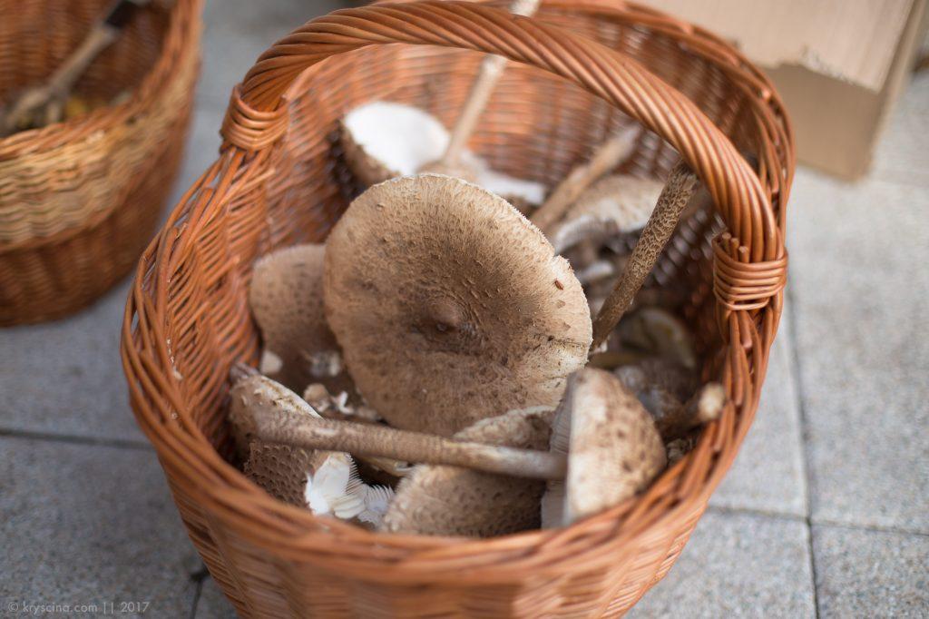 Леса Германии: грибные эксперименты —зонтики и черные лисички