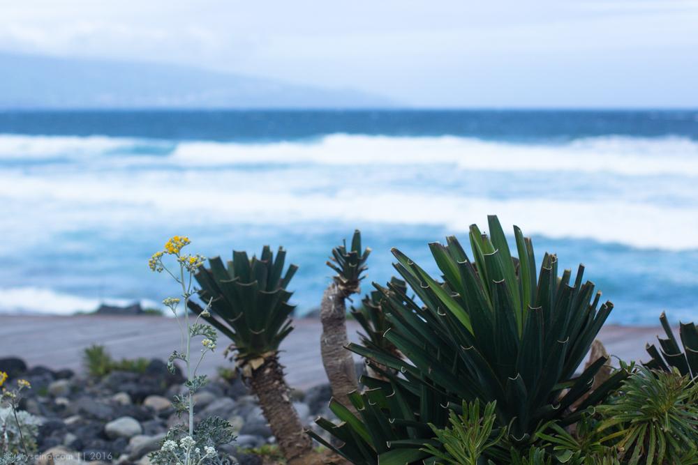 азоры азорские острова север