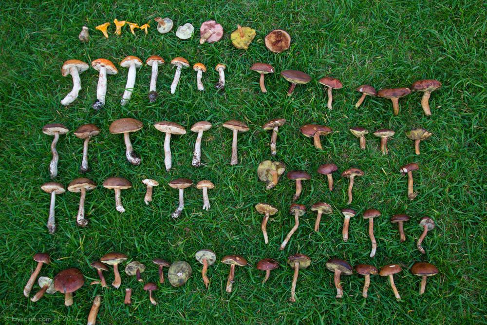 грибы, шашлыки, лес, корги, собака, озеро нарочь, нарочь, путешествие, беларусь, по беларуси на автомобиле