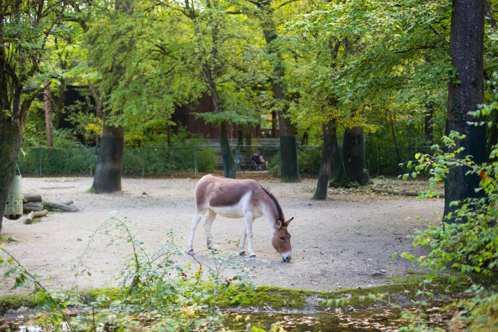 мюнхенский зоопарк