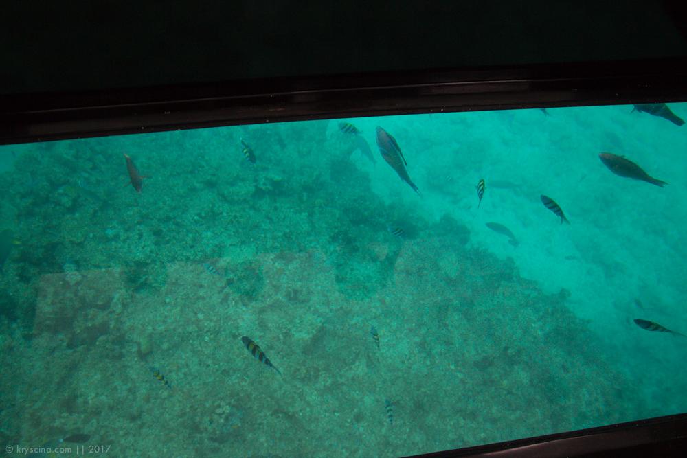рыбсерватория