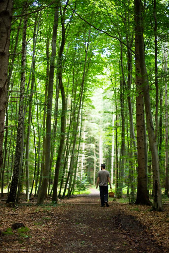 леса германии
